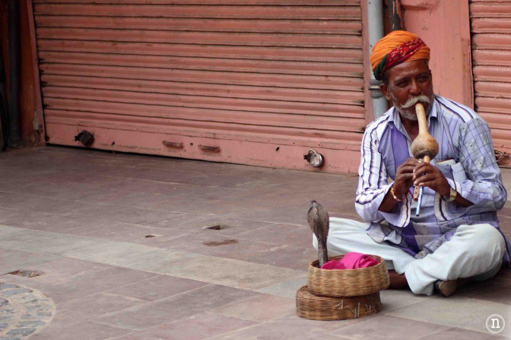hombre de la cobra jaipur
