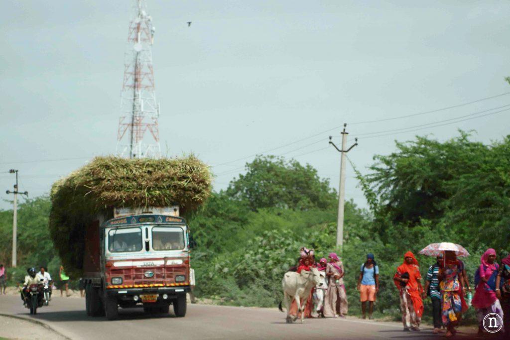 juerga camino de Jodhpur