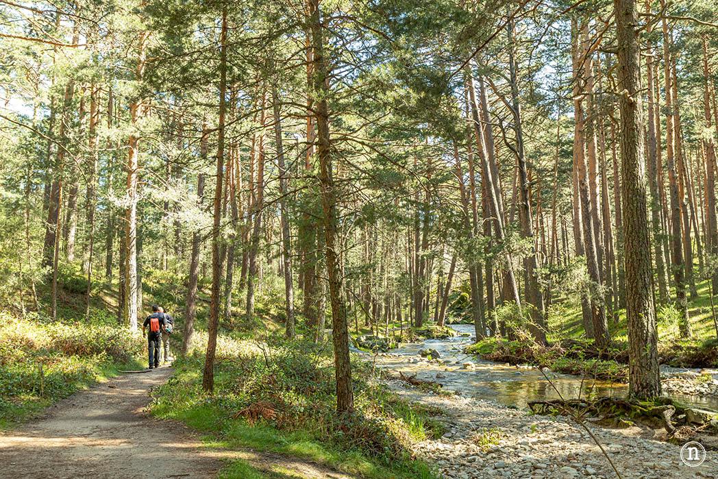 La Senda de las Pesquerías Reales es ese lugar donde, mientras caminas, te piensas que estás en los bosques de Canadá y que, de un momento a otro tras la arboleda, asomarán las Montañas Rocosas.